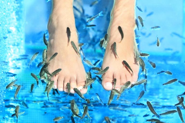 Fish spa Sunny beach