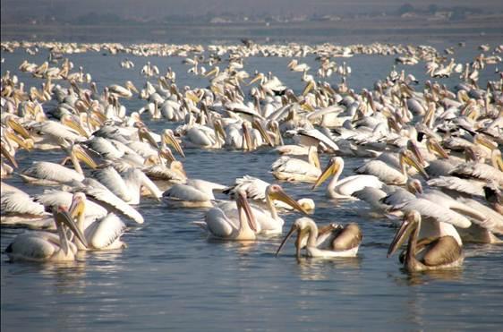 Jezioro Burgaskie