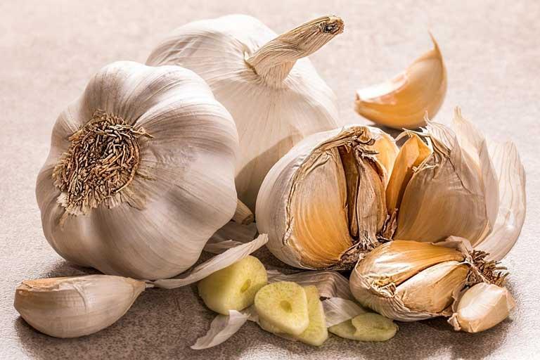 Garlic immunostimulant