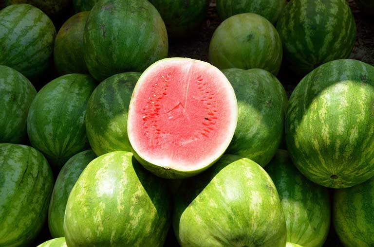 Watermelon as immunostimulants