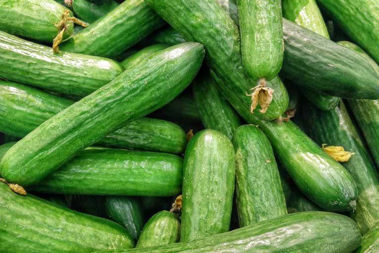 Cucumbers in Bulgaria
