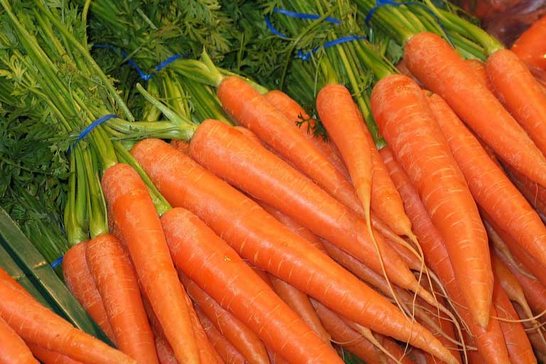Carrots in Bulgaria