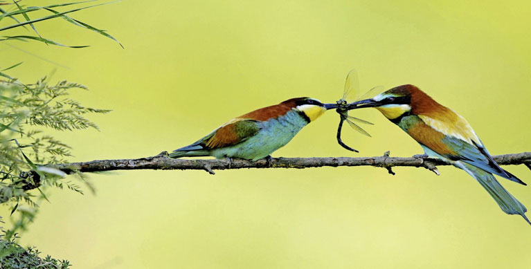 Bird watching in Burgas, Bulgaria